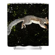 Jumping Gray Squirrel Shower Curtain