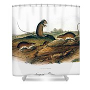 Jumping Mouse, 1846 Shower Curtain