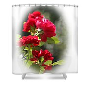 June Birthday Shower Curtain