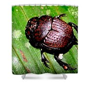 Jungle Beetle Shower Curtain