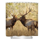 Junior Meets Bull Elk Shower Curtain by Robert Frederick