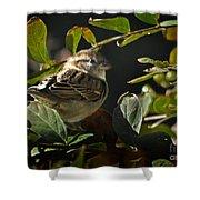 Junior Sparrow Shower Curtain