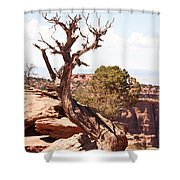 Juniper - Colorado National Monument Shower Curtain