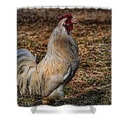 Just A Chicken Shower Curtain