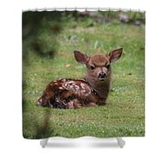 Just Born Bambi Shower Curtain