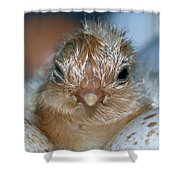 Just Hatched Shower Curtain