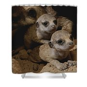 Just Waking Up, Two Meerkat Pups Shower Curtain