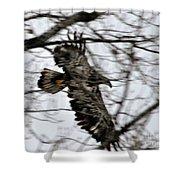 Juvenile Bold Eagle Shower Curtain