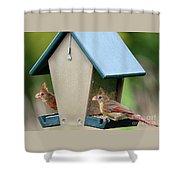 Juvenile Cardinals On Feeder Shower Curtain