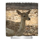 Juvenile Deer Shower Curtain