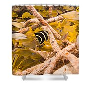 Juvenile French Angelfish Among French Shower Curtain