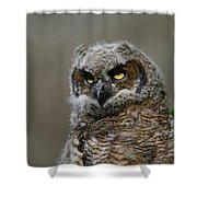 Juvenile Great Horned Owl Shower Curtain