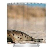 Juvenile Harp Seal Basking In The Sun Shower Curtain
