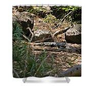 Juvenile Nile Crocodile Shower Curtain