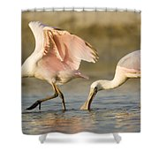 Juvenile Roseate Spoonbills Foraging Shower Curtain