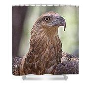 Juvenile Sea Eagle Shower Curtain