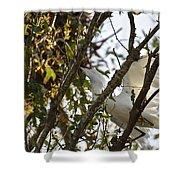 Juvenile Snowy Egret Shower Curtain