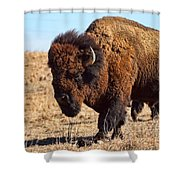 Kansas Buffalo Shower Curtain