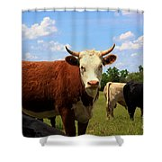Kansas Country Cow's With Blue Sky And Grass Shower Curtain
