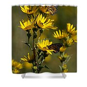 Kansas Monarchs Shower Curtain