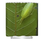 Katydid Muller Range Papua New Guinea Shower Curtain