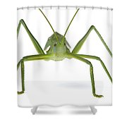 Katydid Silaka Nature Reserve South Shower Curtain