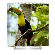 Keel-billed Toucan Shower Curtain