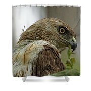 Keeping An Eye On You Shower Curtain