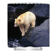 Kermode Bear On Boulder Hunting Salmon Shower Curtain