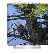 Kettle River Eagle 2012 Shower Curtain