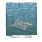 Key Largo Ray Shower Curtain