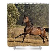 Kicking Up Dust Shower Curtain