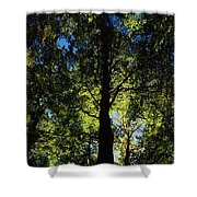 Killarney, Co Kerry, Ireland, Sunlight Shower Curtain