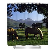Killarney,co Kerry,irelandtwo Horses Shower Curtain