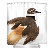 Killdeer - Show Off In The Spring Snow  Shower Curtain