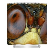 Killer Wasp Shower Curtain