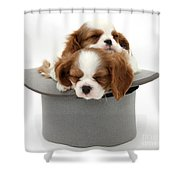 King Charles Spaniel Puppies Shower Curtain