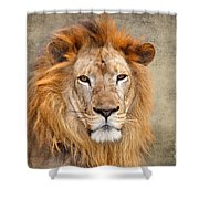 King Of Beasts Portrait Of A Lion Shower Curtain