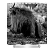 King Of Cats Shower Curtain