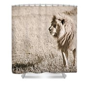 King Of Cats In Sepia Shower Curtain