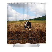 King Of The Hay Shower Curtain