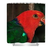 King Parrot - Male 2 Shower Curtain