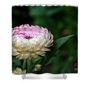 King Rose Strawflower Shower Curtain