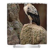 King Vulture Sarcoramphus Papa Perched Shower Curtain by Pete Oxford