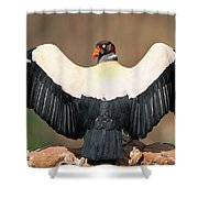 King Vulture Sarcoramphus Papa Sunning Shower Curtain by Pete Oxford
