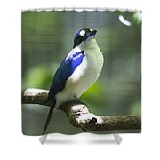 Kingfisher V2 Shower Curtain