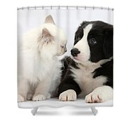 Kitten And Border Collie Pup Shower Curtain
