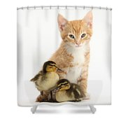 Kitten And Ducklings Shower Curtain