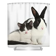 Kitten And Dutch Rabbit Shower Curtain