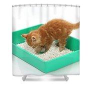 Kitten And Litter Tray Shower Curtain
